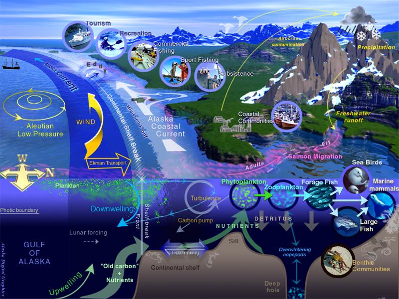 Ecosystem-based model