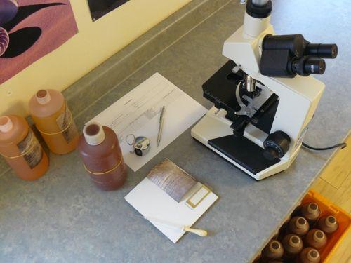 Plankton analysis